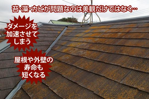 苔・藻・カビがダメージを加速させ屋根や外壁の寿命も短くなる