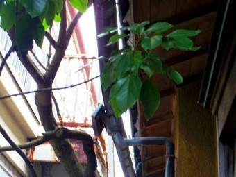 宇都宮市雨樋銅板、軒樋の外れ