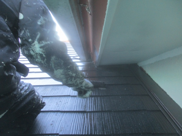 大屋根の中塗り中です