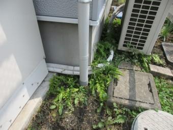 縦樋を配水管と繋ぎました